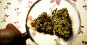 Big Bud Bust Nets $6.1 Million in Marijuana