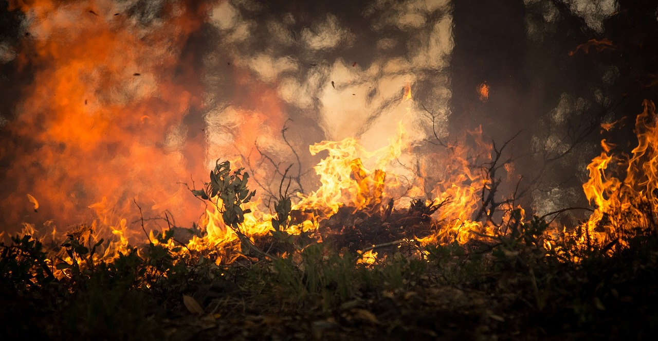 Man Arrested for Looting During Wildfires